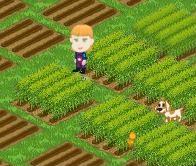 Farming For Fun
